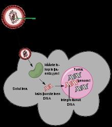 nyelvlemez giardiasis gyomorrák célzott terápia