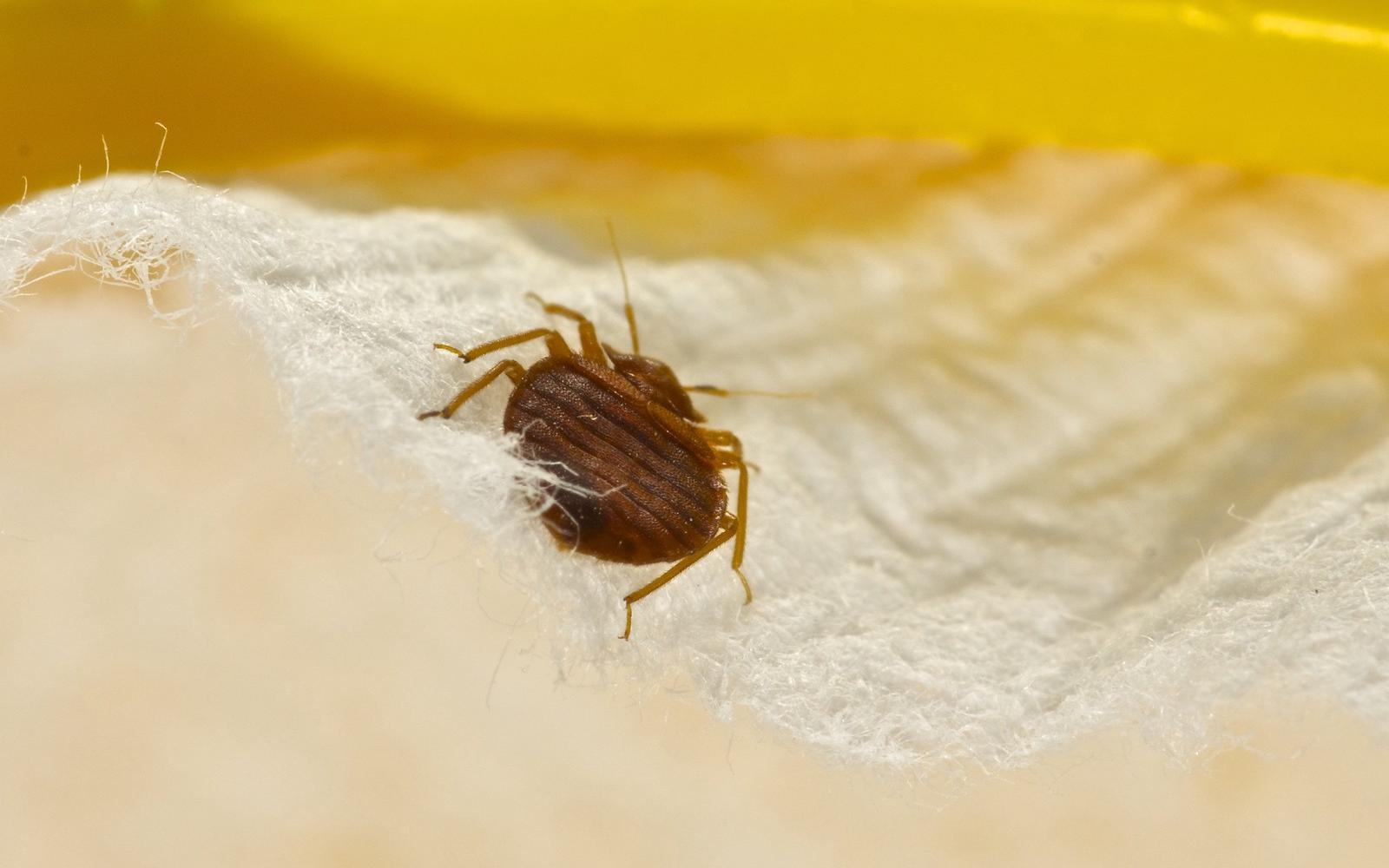 élő egészséges, megtisztítja a paraziták testét amikor sokáig nem szabad enni a rossz leheletet