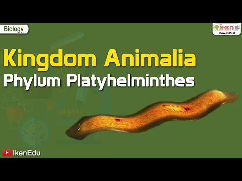 hány platyhelmintes faj létezik