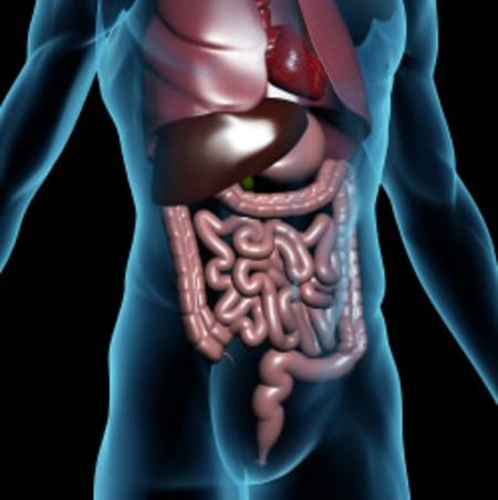pinwormok leírása a máj méregtelenítése kiegészíti a mellékhatásokat