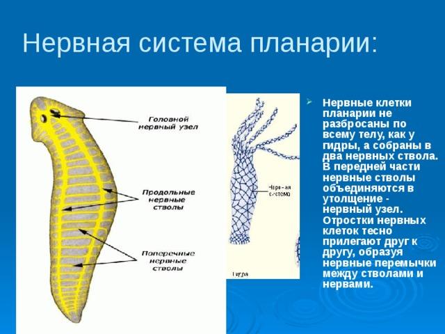 a helminták inkubációs ideje)