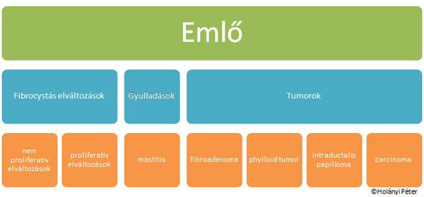 intraductalis papilloma és terhesség