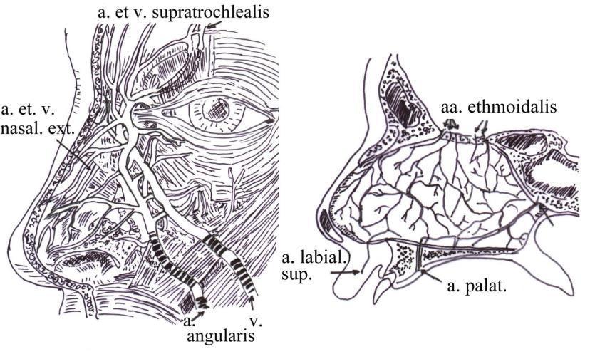 rezorcinol a genitális szemölcsök kezelésében