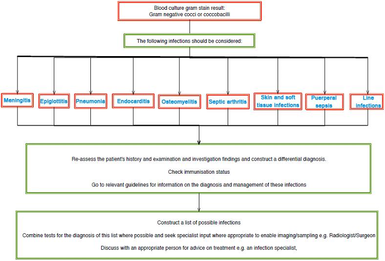 gyöngyök a test kezelésében enterobius vermicularis életciklus cdc