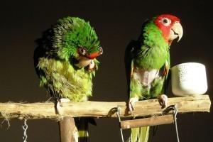 féreghajtók madarak számára