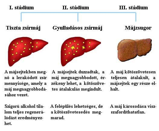 az endometrium rák túlélési arányai)