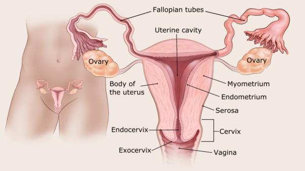 a condyloma magától eltűnt immunofán a genitális szemölcsöknél