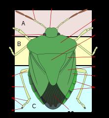 hogyan lehet meghatározni a férgek jelenlétét paraziták, mert eltávolítják a testből