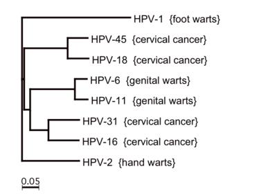 magas kockázatú hpv genotípusok Étrend-kiegészítők paraziták tisztítására
