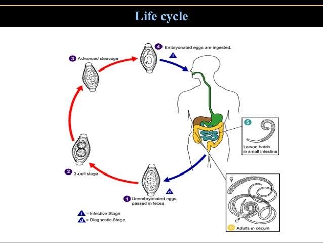 mudra az emberi papilloma vírus kezelésére