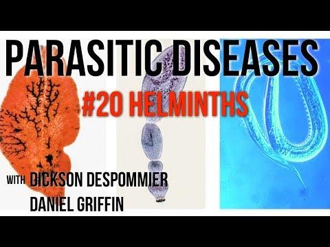 a helminthiasis fertőző szalag szarvasmarha kerek féreg
