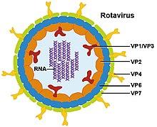 vírusok példa érgyógyászat felnőttek és gyermekek számára