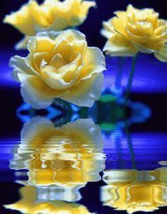 bakteriális rák rózsákban)