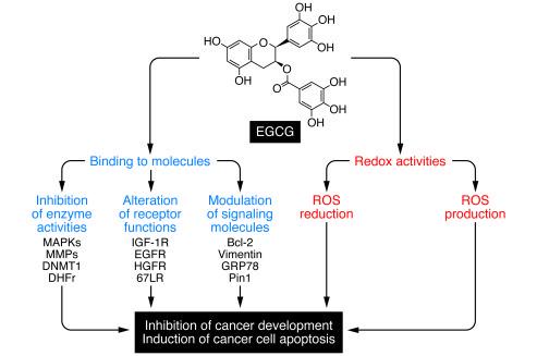 ami a 2. stádiumú rák féreghajtó egyszerű jelentés