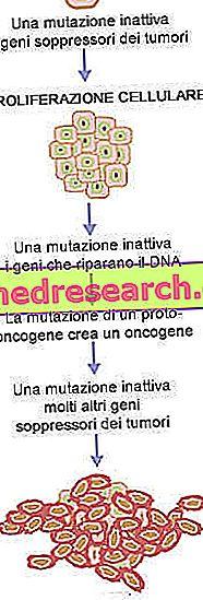 nemathelminthes biológus x)