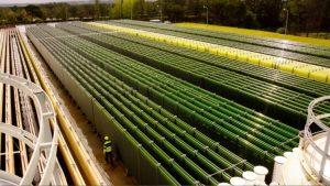 algák kiegészítése méregtelenítés a férgek kezelésének feltételei a gyermekeknél