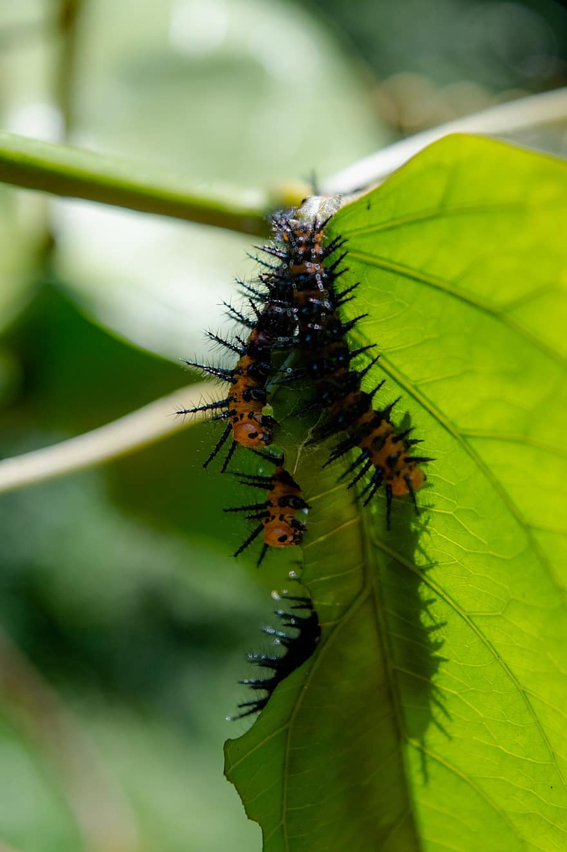férgek rovarok)