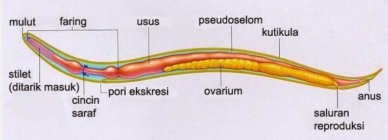 ammónia szaga és kezelése giardiasis fénykép