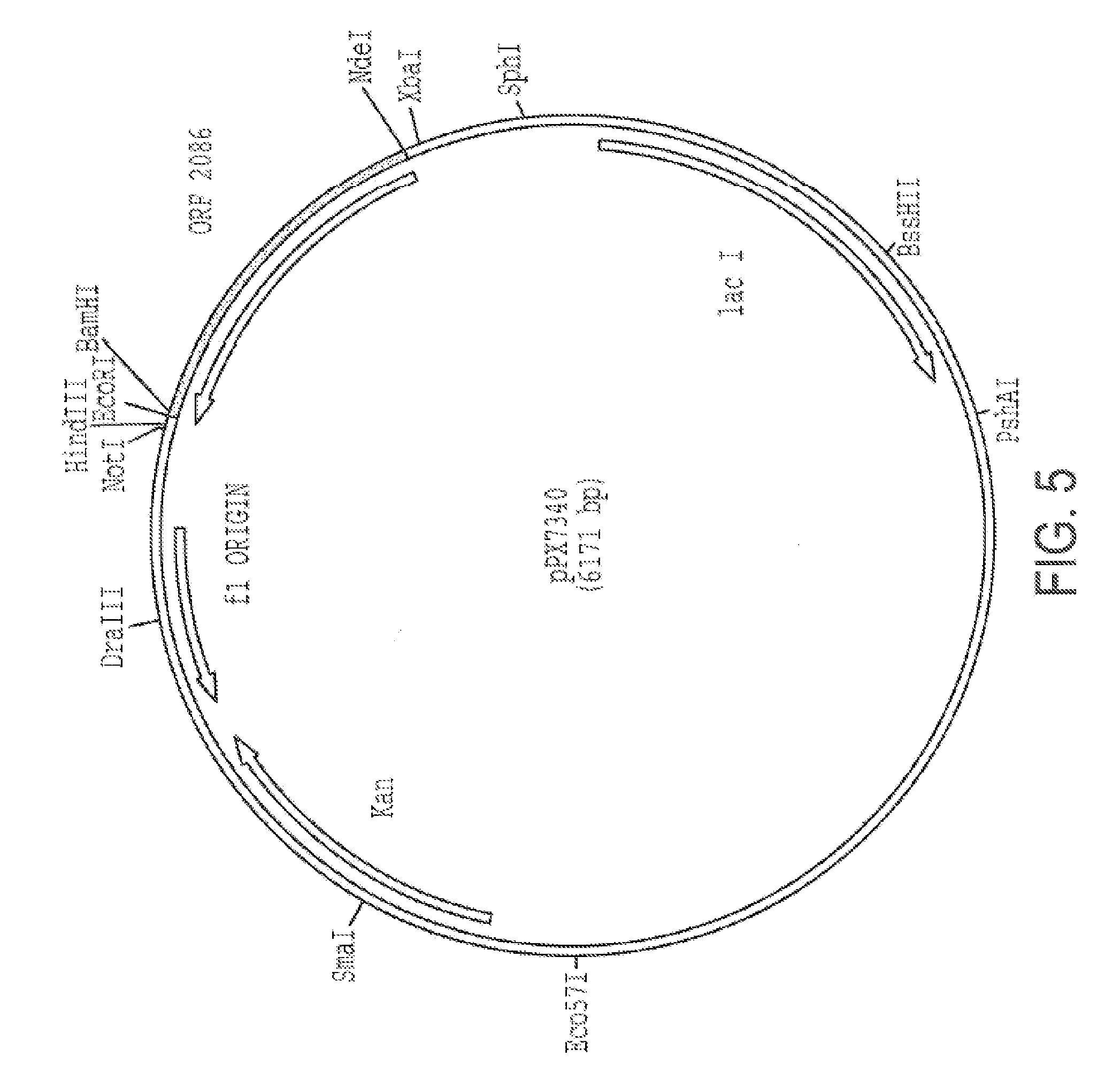 papillomavírus p16 fehérje