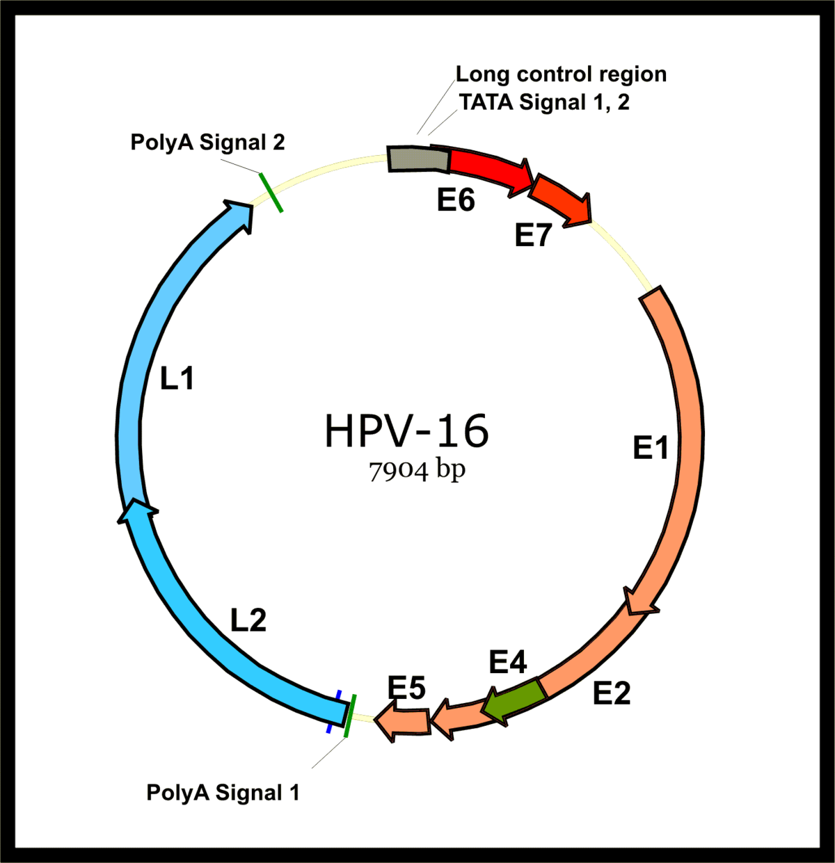 vélemények a paraziták kezeléséről a szervezetben papilloma vírus vakcina 9 törzs