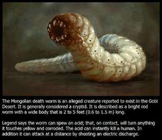 a féreg pinworm hpv pozitív ferfiaknal