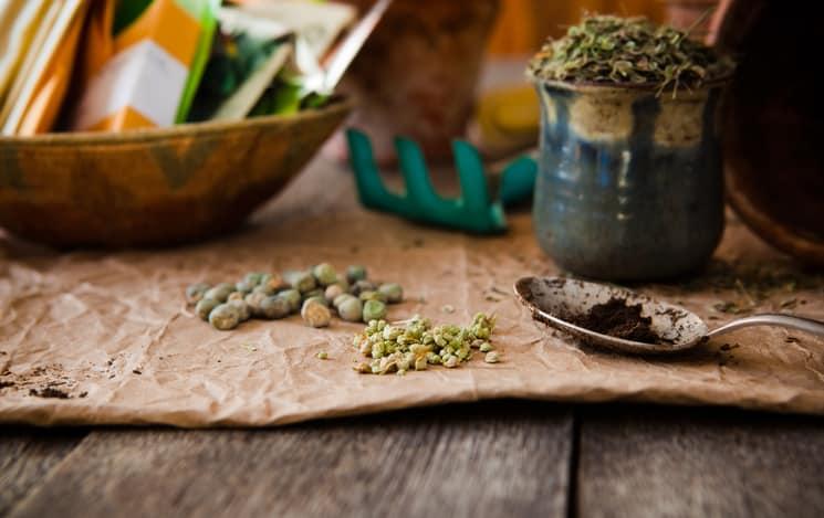 Ideális hétvégi program - Ezeket a zöldségeket kell szeptemberben elültetni | Femcafe
