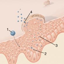 hpv vakcina milyen gyakran a nyirokcsomók endometrium rákja