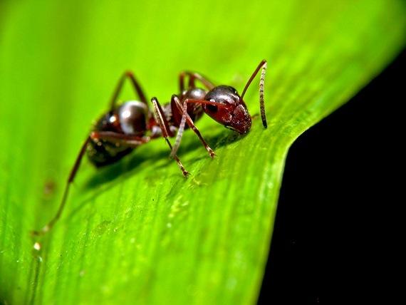 Hangya a kertben – Módszerek a hangyák ellen