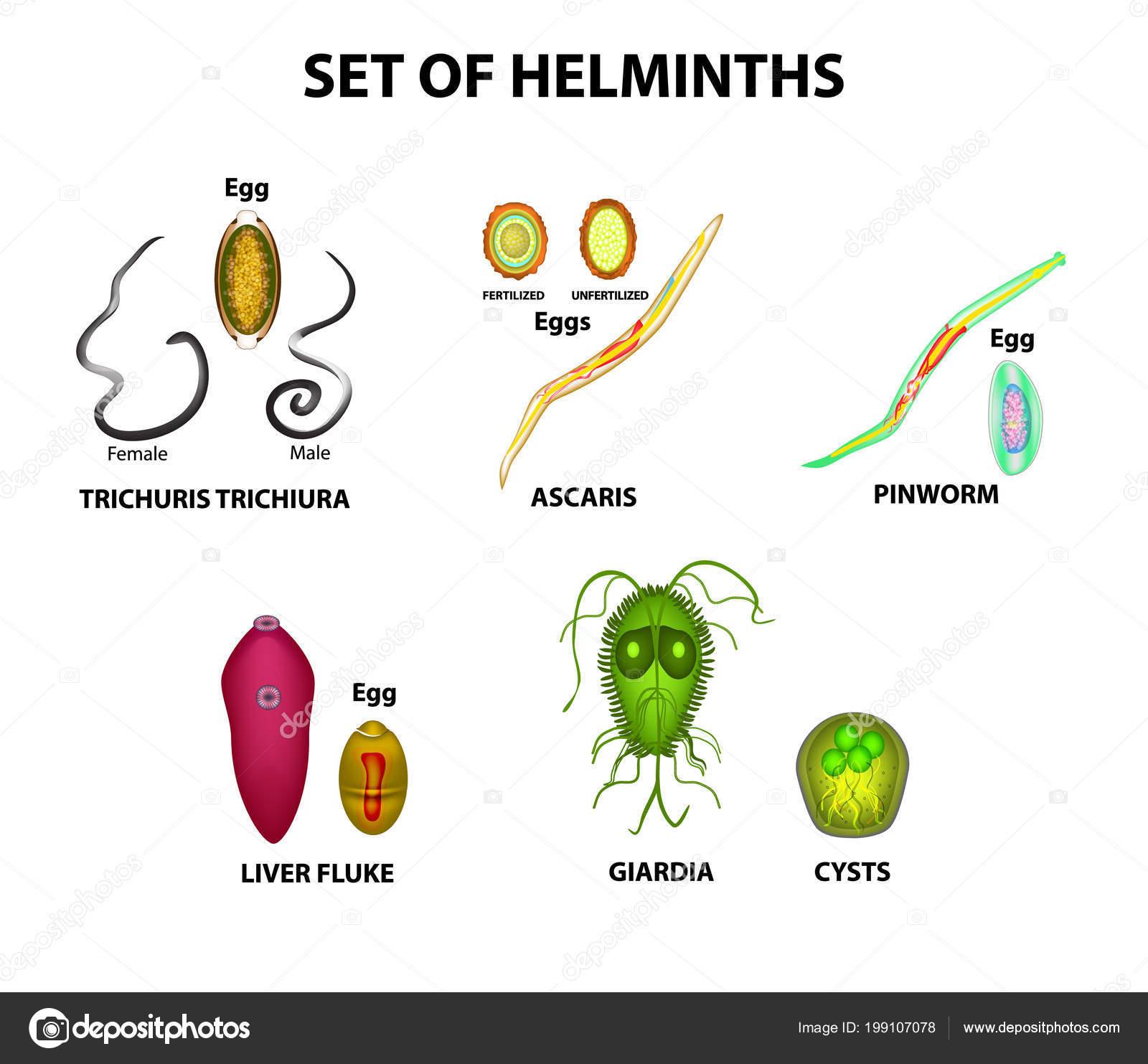 a genitális szemölcsök tanulmányozása paraziták tulajdonságai plazmodium falciparum