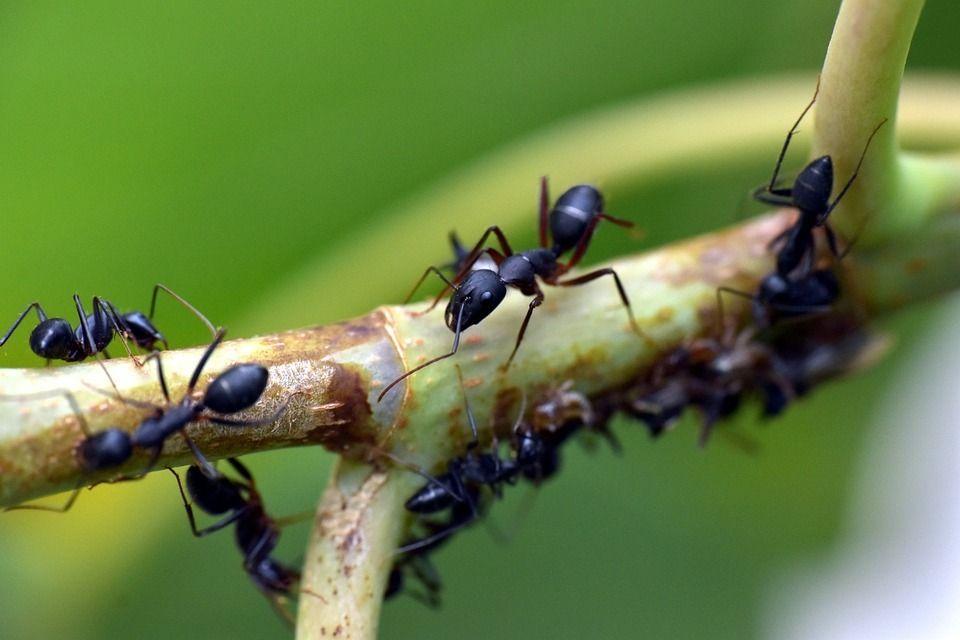 hangya hangyák okozhat szemölcsöket a hpv 16 típusú